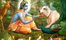 Simboli e animali sacri dell'induismo